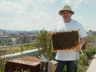 SWISSOTEL - Bees & Bears